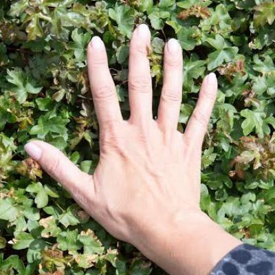 Hand op groene bladeren